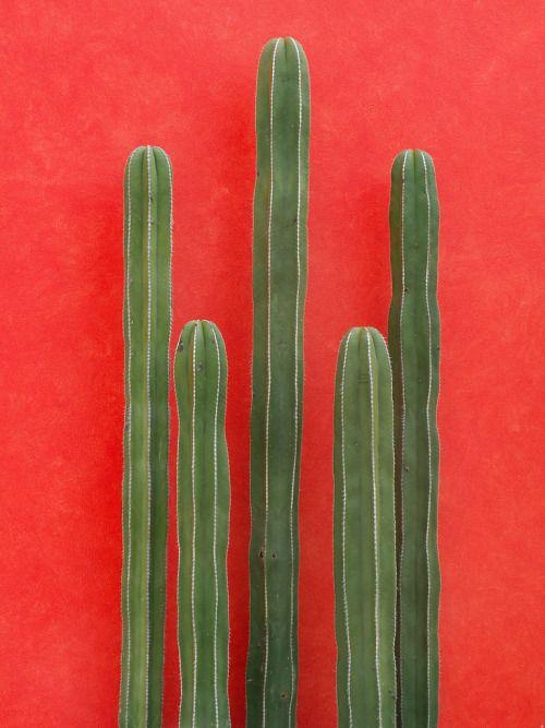 Good southern Christmas photo. Holidays holiday southern cacti cactus