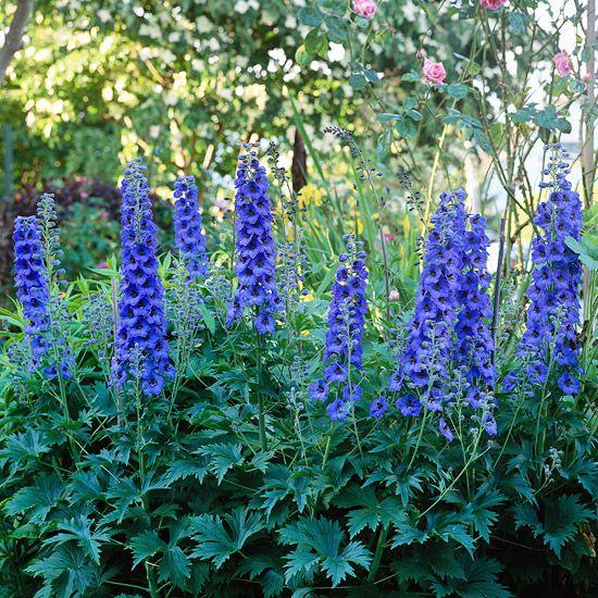 这些浪漫的植物是浪漫的小屋式花园的必备品。