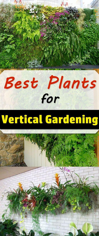 植物的正确选择在垂直生活墙花园的设计和功能中起着重要作用。在这篇文章中,我们展示了选择垂直园艺的最佳植物。