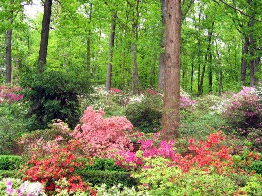 照亮阴凉的花卉植物,照亮你院子里的阴影区域。植物类型(带照片)和他们喜欢的阴影类型。