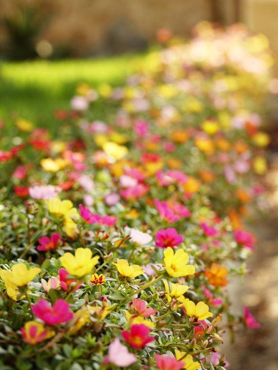 这些原生的低水植物在炎热的沙漠花园中茁壮成长。查看我们在西南花园的顶级花镐,并获得HGTV花园的专家种植和种植技巧。