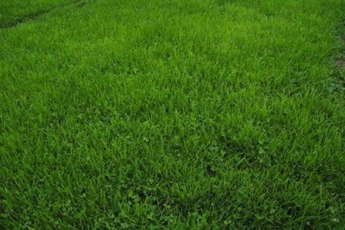 准备将资源窃取的郊区大草原变成低维护的绿洲?不要错过这五种草替代品!