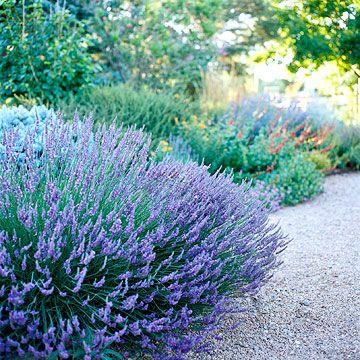 当夏季炎热起来,依靠这些耐旱植物来保持自己的 - 并且仍然看起来很漂亮。