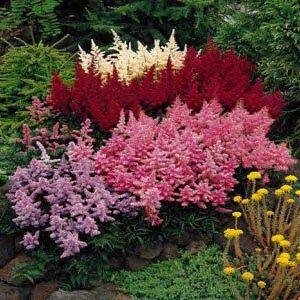 什么是一个阴凉的花园最好的开花多年生植物?有许多美丽的选择可用于低光花园。