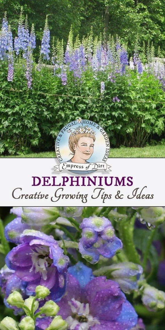 花园技巧和想法,包括种子开始,双花期和护理。