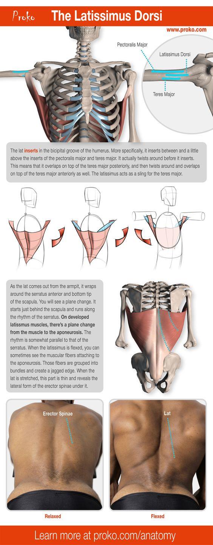 人体课程剖析在图绘画课程中,您学到了许多绘制图形的核心概念,但如果您想从中获取绘图,则您的培训不完整...