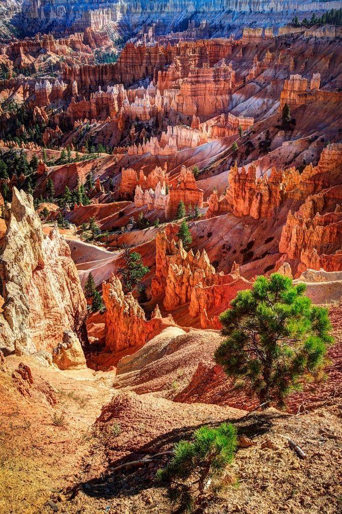 布莱斯峡谷国家公园,犹他州,美国。