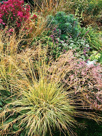 使用这些易于护理的原生植物,使园艺变得轻而易举。