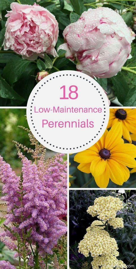 低维护多年生植物非常适合装饰您的花园。他们需要很少的保养,并且长年生长。这里有18个华丽的多年生植物名单!