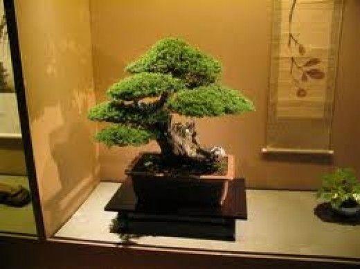 盆景是一种日本艺术形式,使用容器中生长的微型树木。盆栽这个词通常用英语作为盆中微型树木的总称。盆景没有种植食物,药物或创造...