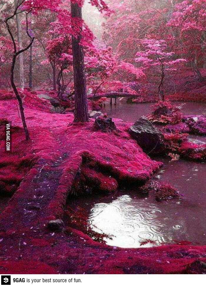 Pink Forest, Ireland <3