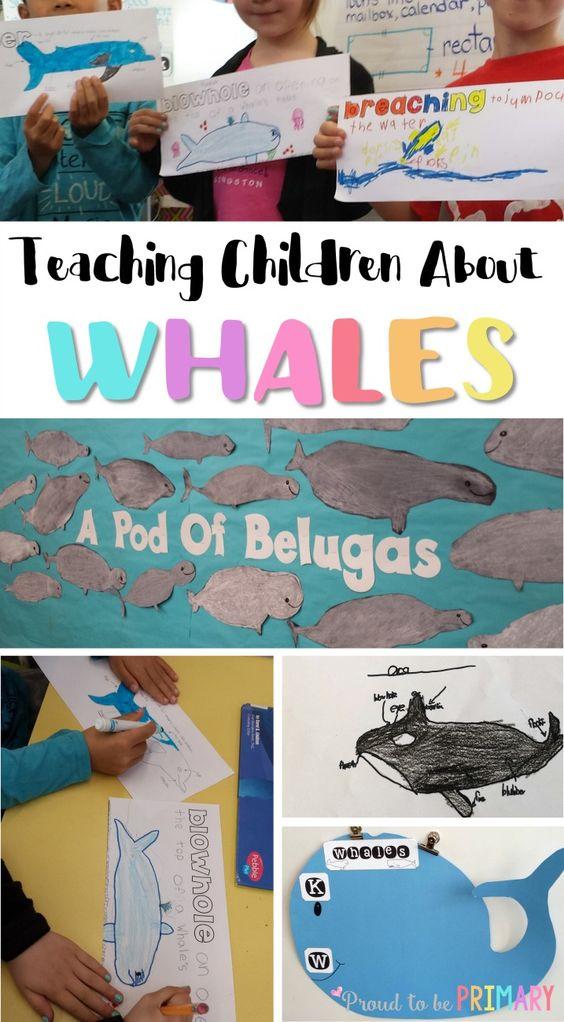 阅读这篇关于鲸鱼的文章,了解白鲸定向绘画的想法,建立鲸鱼词汇的活动,以及让您的小学生参与科学课程。