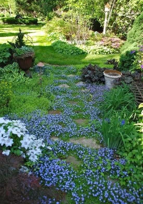 匍匐Mazus,地面覆盖// Great Gardens Ideas //