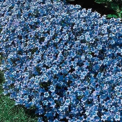 如果你想通过草地看看这些可爱的地面覆盖植物品种,而不是