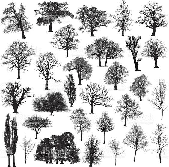 三十个不同的,详细和美丽的冬季树剪影。