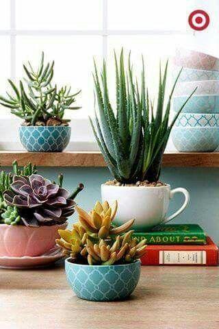 植物/花卉/多汁植物/仙人掌/花园