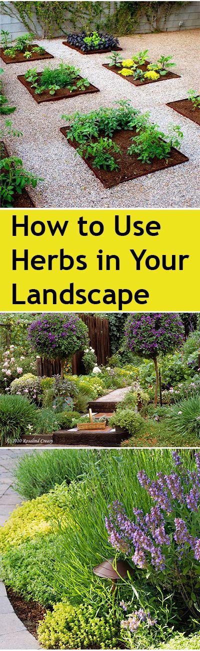 在院子里放些新鲜的草药总是很不错的,所以你可以随时挑选,使用或闻到它们。然而,有时往往很难找到种植它们的地方,或者如何将它们并入您的花园和院子装饰的其余部分。不... #diy #herbgarden #herbs