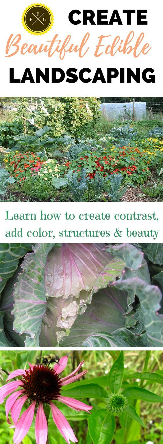 How to Create Beautiful Edible Landscaping