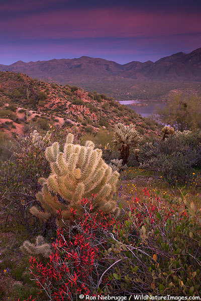 Beauty outside Phoenix.  Meet Photographer Ron Niebrugge of  Niebrugge Images