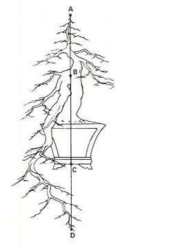 级联盆景是一种树干开始向上生长但突然向下转动,并逐级下降到容器底部以下的点。以梯级风格创造的盆景应该类似于在山区,沟壑或流域地区的陡坡上生长的树木。有两种类型的瀑布式盆景:正式...