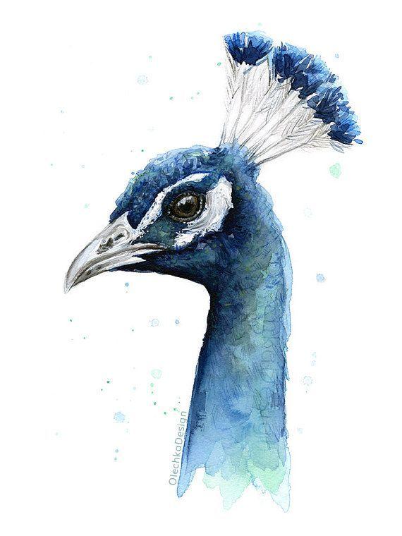 孔雀水彩打印,鸟画,动物,水彩,异国情调的鸟图稿,Giclee艺术打印