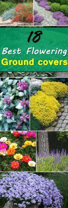 看看这18个开花地面覆盖植物,你会发现这个清单上的一些最好的低生长植物,它们不仅容易生长,而且看起来也很漂亮。