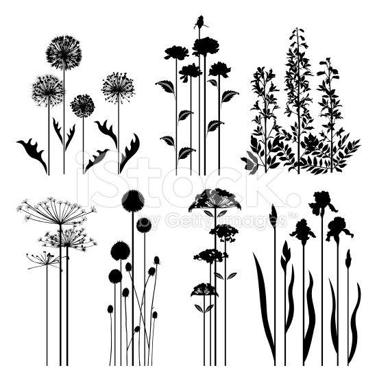可变的春天植物剪影。
