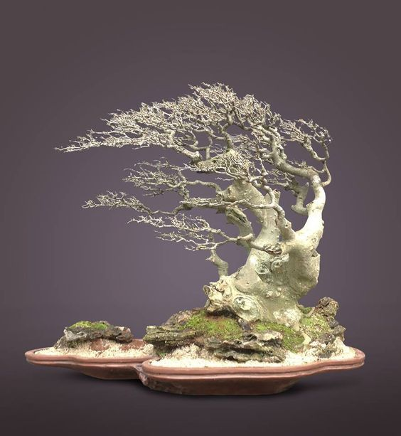 WhatsApp的分享榕树盆景(老矮人树)在您的家,在你的办公室,谁想要得到老大树过于微型你的办公桌上özel.b的顶部非常特殊的盆景礼物是无价的花的爱。 Bosai是一个充满鲜花的极好爱好,与您共度美好时光。这是一款非常高品质的花卉爱好者礼物。盆景的种类繁多,而不仅仅是博赛的一种。 ,Https://www.youtube.com/channel/uccghsblr-pd2kknsnu1l94q订阅YouTube频道的不同花更多的视频生活的一种矮化树就会知道申请,可以查看一生不同的形式。 Balikesir是一款非常特别的礼物,适合那些为您所爱的人寻找特别礼物的人。多年来,我们一直在Balikesir为您工作。我们的目标是将您和您的亲人聚集在一起。为了给你带来超级爱的能量,我们通过鲜花收到你们。我们有机会根据您的意愿改变鲜花的颜色和底部。当你的鲜花准备好时,你的照片将通过WhatSapp发送给你。此外,当您到达时再次通知您。您是客户特定的概念和您的花店。有机会随时介入你的花。我们不同,我们是不同的。你是不同的,因为你是BalıkesirBuseÇiçekçili的顾客。我很容易达到我们hediyemkapida.co什么Shappi线或0552245 05 33 0266245 05 33,也可以送鲜花很容易透过电话与亲人..爱情是花,花是情感,鲜花和文明; Çiçek是我们的艺术对您而言,只需点击一下即可联系我们。