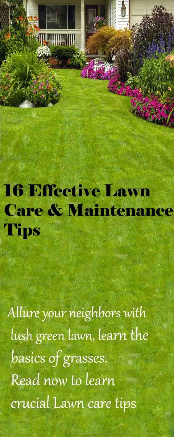 许多园丁认为没有郁郁葱葱的绿色草坪,没有花园是完整的。如果保持得非常好,它可以给花园带来柔软的天鹅绒般的触感,另外还有一个最喜欢的地方可以让宠物和孩子跳跃和躺下。