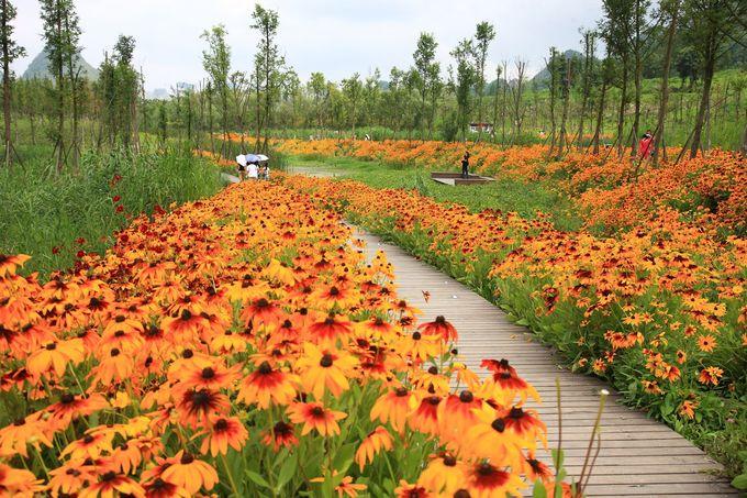 明湖湿地公园/ Turenscape
