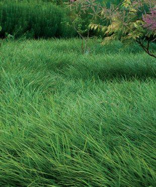 当你长出草地时,将未使用的草坪换上集聚的地被或者低种植者的混合物
