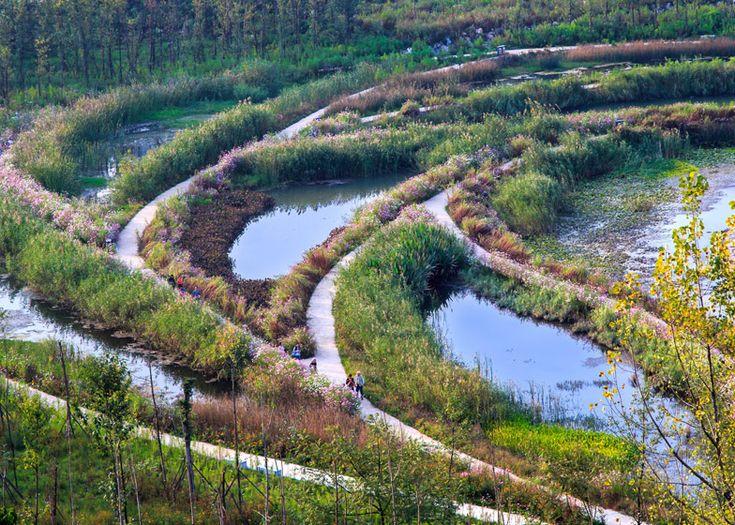 """Turenscape将""""无生命的沟渠""""变成了蜿蜒的堤道的湿地公园。"""