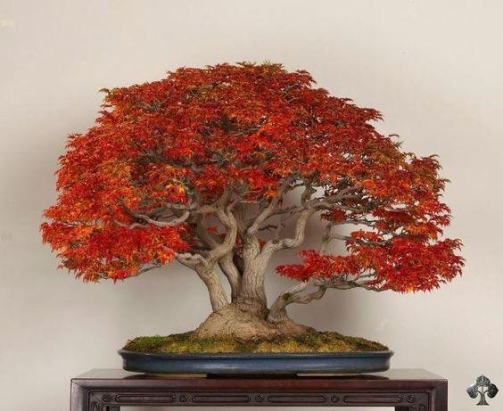 """在社交媒体(包括Facebook和Twitter)上,我们分享了""""每日盆景""""。十大最受欢迎的树木值得在这十大特别关注。享受!"""