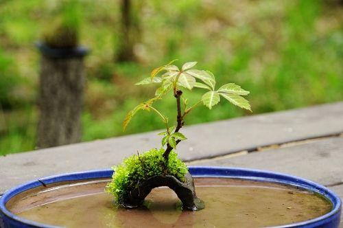 盆景园艺创意!本网站拥有微型盆景盆和植物的许多新鲜照片。