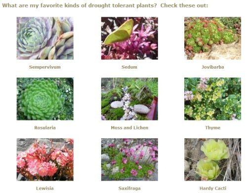 干旱智能战略;植物抗旱的方法很多;如何帮助你的植物生存......