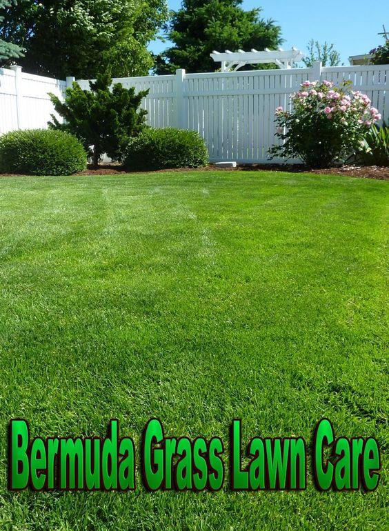 百慕大草坪草坪护理。百慕大是一种低矮的草地,草地非常坚硬,为地面提供了绝佳的遮盖,以及......