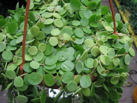 """有许多不同类型的悬挂多汁植物,它们很容易照顾,因为悬挂的多汁植物不像其他悬挂植物那样需要浇水。在回答""""我的选择是什么""""时,你可以看到如果你想要成长,有很多选择......"""