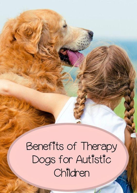 自闭症儿童的治疗犬有很多不同的好处,从帮助您的孩子形成令人难以置信的纽带到提供平静的存在。