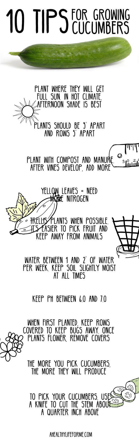 10种黄瓜种植技巧
