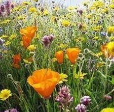 有些人喜欢井井有条,整洁的景观,而其他人则喜欢大自然的外观。一个自然景观很可爱,但是当你谈到你的家庭花园时,它可能需要一些增强来实现自然的外观。种植野花种子是一种简单的方法来实现...