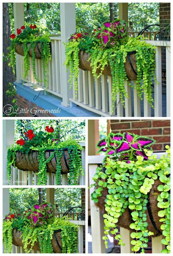 悬挂篮子的最佳植物:提高前廊遏制吸引力。三种易于种植的植物,会让你的邻居青睐嫉妒!