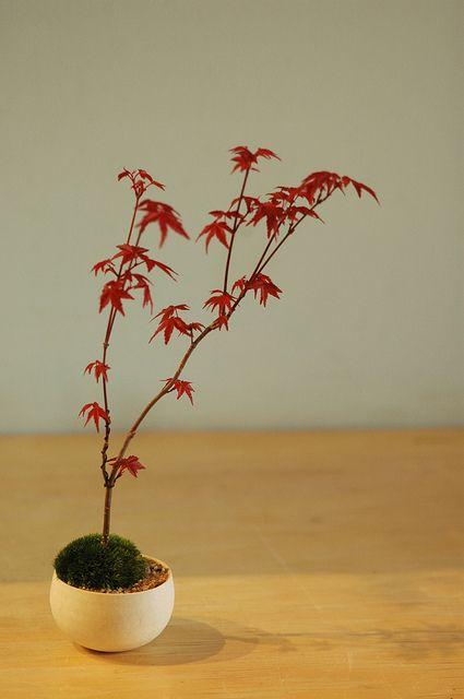 "Sinajina制作的Keshiki盆景。青苔表达的世界?他们是盆景的基本风格。:Sinajina""Keshiki Bonsai""@银杏电讯报"