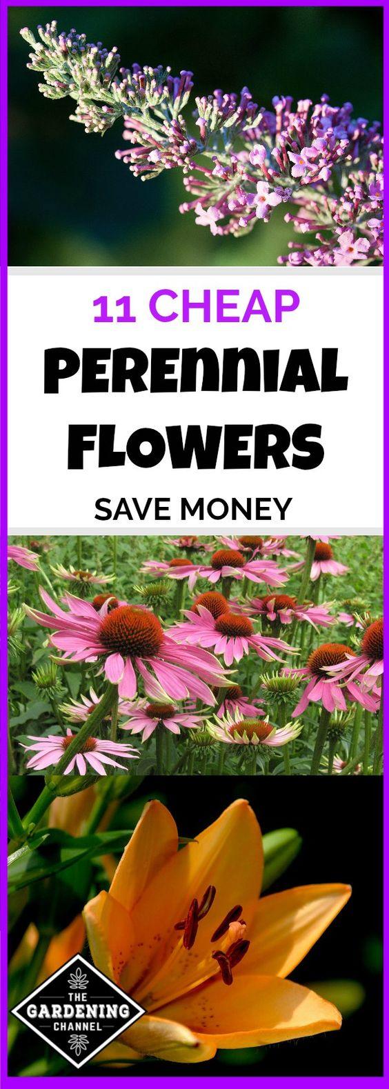 将多年生花卉视为您花园中的长期投资。他们每年返回20年或更长时间,在混合床或花园中看起来很可爱。