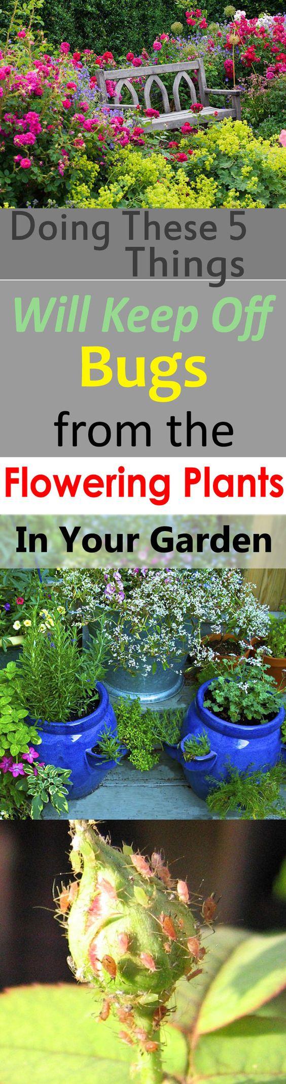 那些讨厌的花园害虫会破坏你的开花植物吗?继续阅读!做这5件事肯定会挡住你花园里开花植物的虫子。