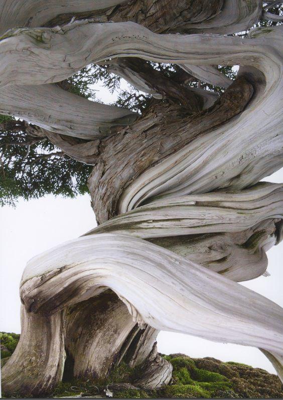 """从意大利米兰世界着名的Crespi Bonsai博物馆欣赏到非凡的盆景树。自从我们看到这个美丽的新盆景画廊书以来已经有很长一段时间了。特别是考虑到价格(对于这种高质量和大小的精装书,你会期望至少再支付20.00到30.00)。拥有208页完美拍摄的盆景,全彩色的光彩。摄影:Fabio Petroni���文字来自Anna Maria Botticelli。 Luigi和Susanna Crespi的序言。精装。 10.3""""x 13.7""""(26 x 35 cm)。"""