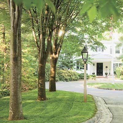想为您的景观增添一些清凉的美丽?这里是快速增长的最喜欢的遮阳,筛选和壮观的观赏美景