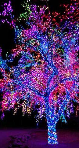 逐步指导显示如何用圣诞节灯包装树。迷你灯最适合用灯包装树木。