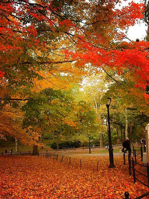 秋季。纽约市中央公园。 -   - 对纽约秋季的更多样式感兴趣?查看我的导游,了解最佳中央公园秋季景观:中央公园八大秋季景观 - 在我的网站NY透过镜头欣赏我的纽约市摄影。对我的工作感兴趣,并对公关和媒体有疑问?查看我的:关于页面 - 公关页面 - 媒体页面要购买我的任何作品,请在此处查看我的网站画廊以获取相关信息。要使用我的任何商业照片,请随时通过电子邮件与我联系,电子邮件地址为photos@nythroughthelens.com