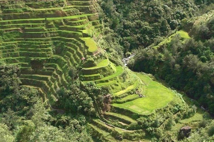 Rice Plantations in Philipinnes