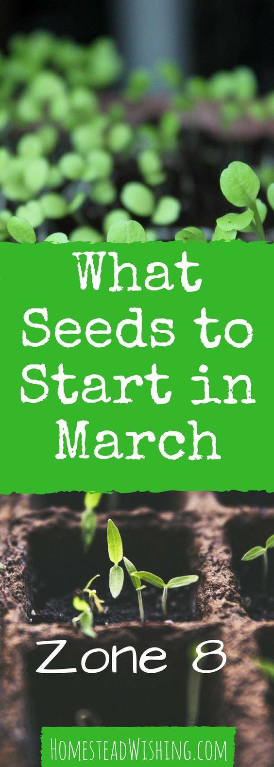 什么种子在三月开始? -  ZONE 8此版本适用于室内种子。不知道要种什么?三月种植,三月种子开始